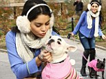 Puppy love: Vanessa Hudgens takes dogs out for stroll in New York and almost loses her grip!