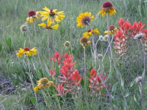 "An ""untidy"" unlawn of native wildflowers and grasses, each species allowed to grow where it prefers in natural groupings."