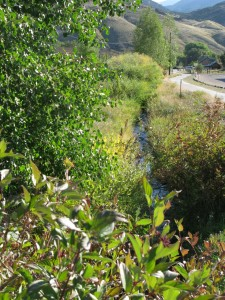 Grasses, shrubs, and trees provide vertical and horizontal diversity along an urban creek.