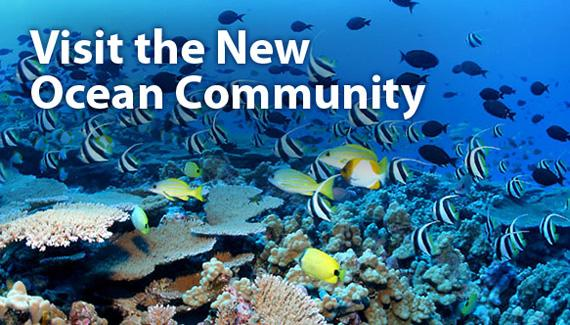 Visit the New Ocean Community