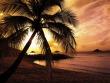 Palm Sunset Wallpaper