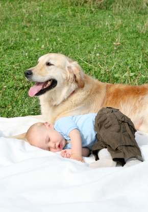 prepare your dog for a new baby