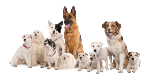 Picking a dog breed