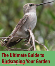 Ultimate Guide Birds