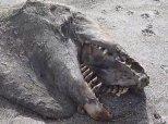 New Zealand Sea Monster