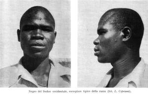 Another West Sudanic type, from an old anthropological textbook, back in the days when race still existed and we could still discuss phenotypes and whatnot. You know, before the Cultural Marxist dickwads took over?