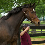 Preakness Champion, and Mother, Toughs It Out