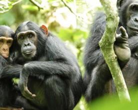 Chimpanzee & Cultural Tour