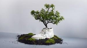 Oat Shoes, des baskets biodégradables
