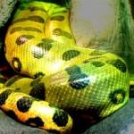 Big-Snake-2