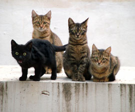 kittens group