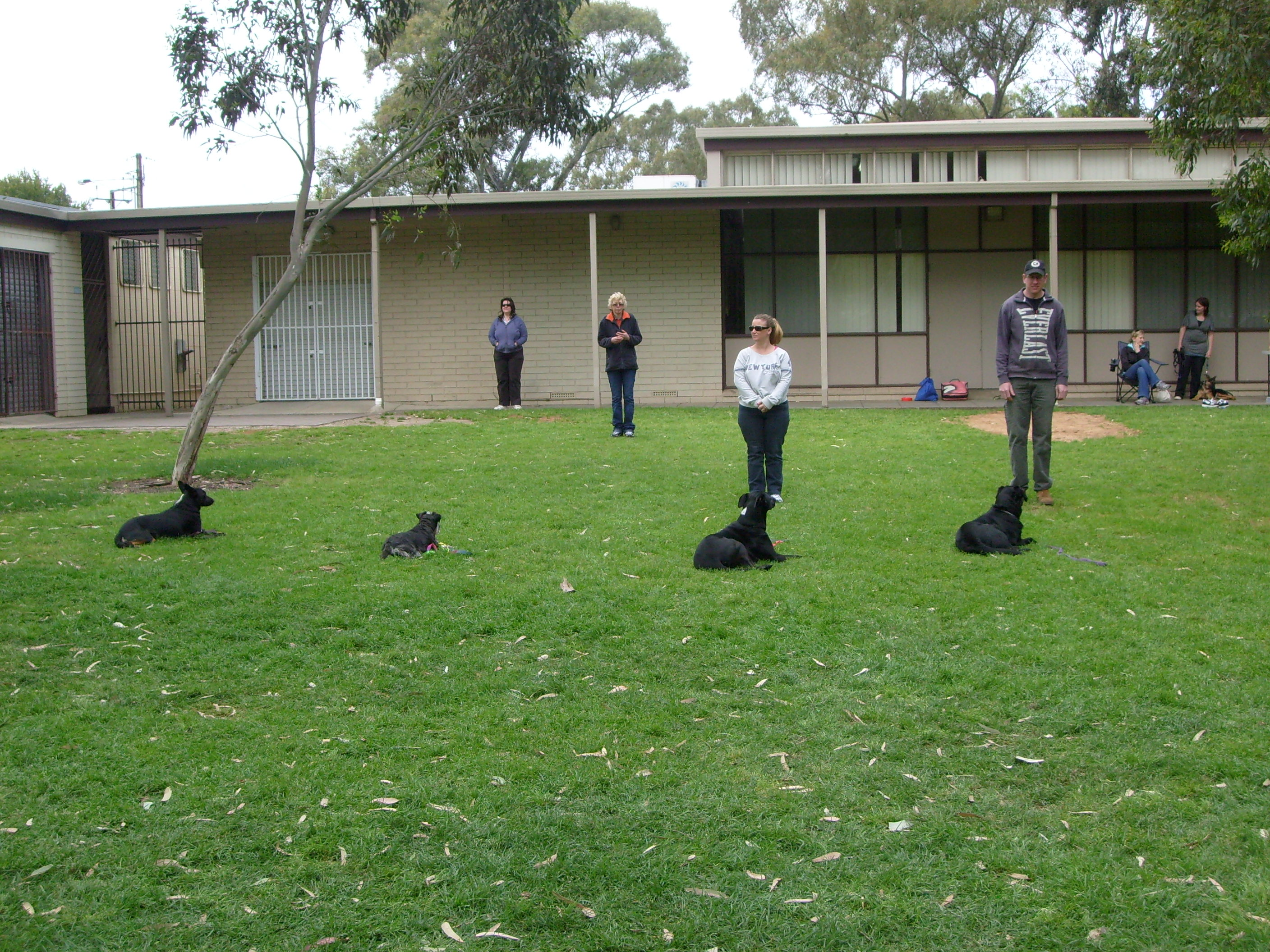 Adelaide Dog Obedience Advanced