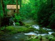 Forest Watermill Wallpaper