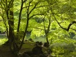 Green Trees Wallpapers