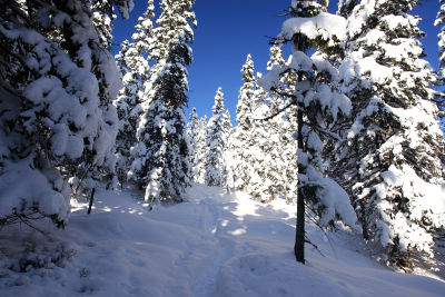 Durch dichteren Wald und über schneebedeckte Lichtungen