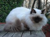 Photo de BASTET, chat perdu à RENNES
