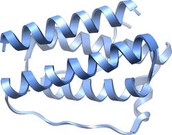 leptin formula
