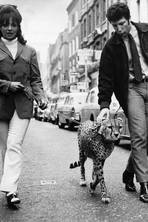 What's new, pussycat? Tom Jones in Sixties Carnaby Street