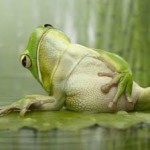 "frog with hand on stomach - ""listening to your body"""