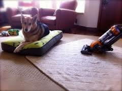 dog bed vacuuming