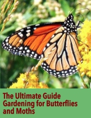 Ultimate Guide to Butterfly Gardening