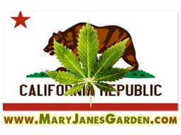 marijuana seeds from California