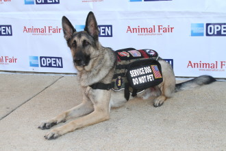 K9s For Warriors Service Dog Axel - Small Business Owner with a Huge Purpose:)
