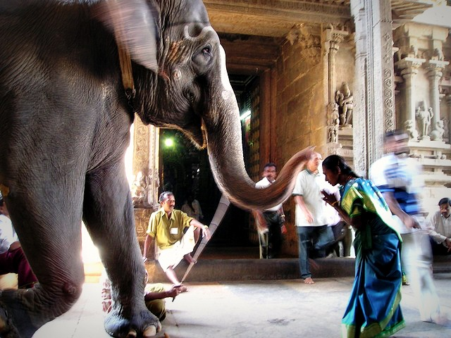 elephant in a temple in India
