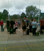 group obedience classes1