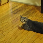 Her cat Morris