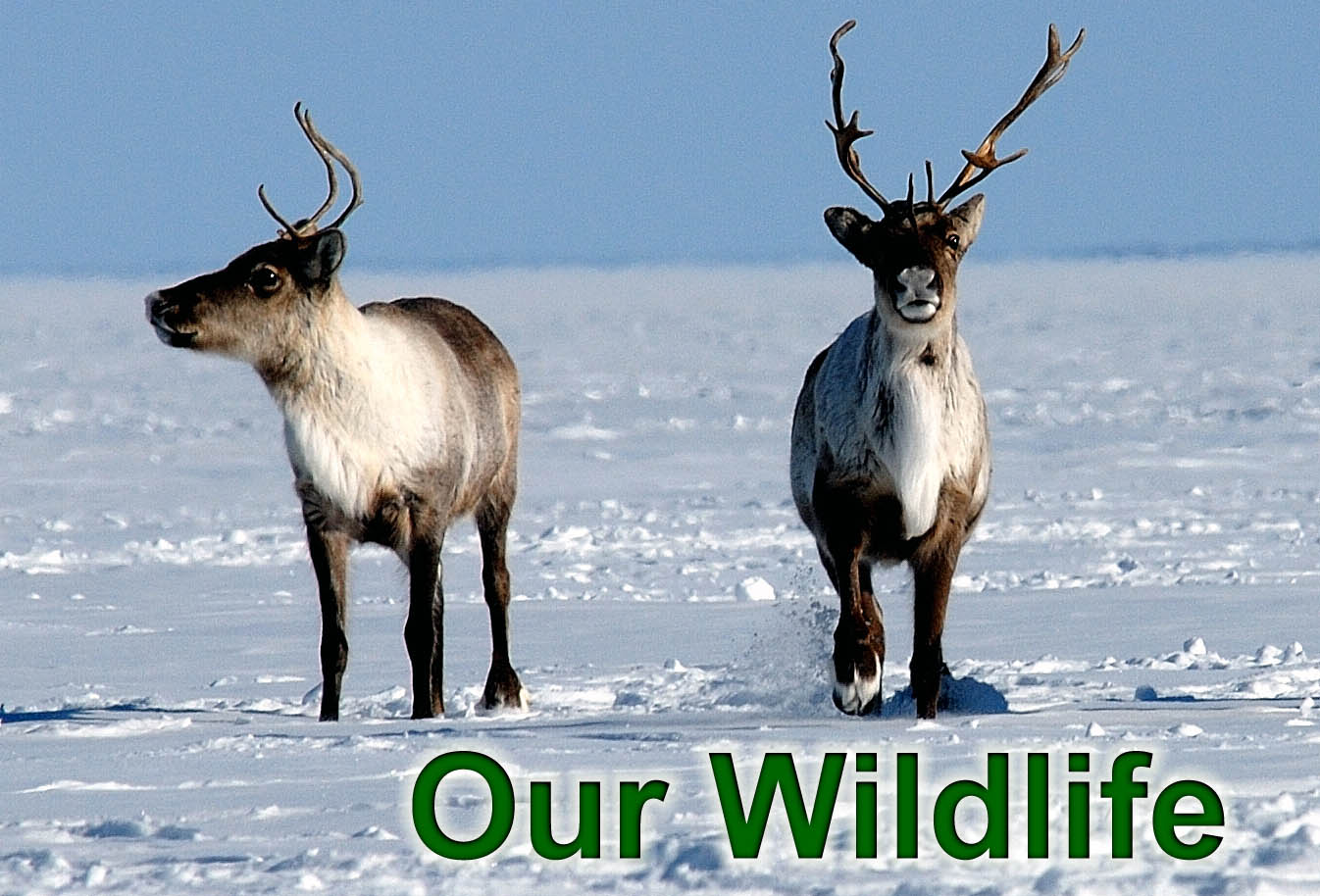 Click here for information on Our Wildlife