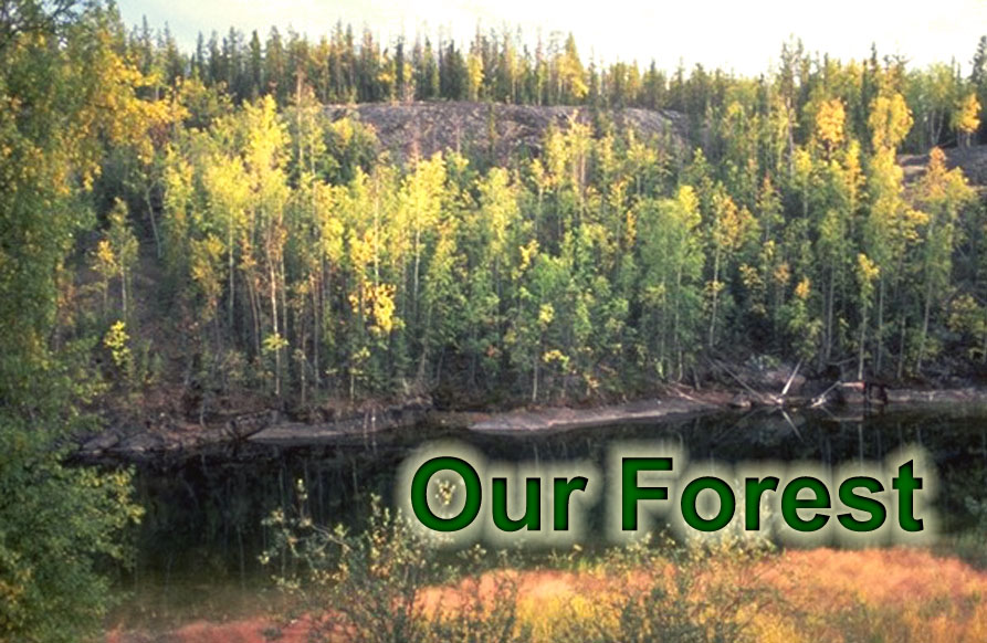 Click here to learn more about Our Forest