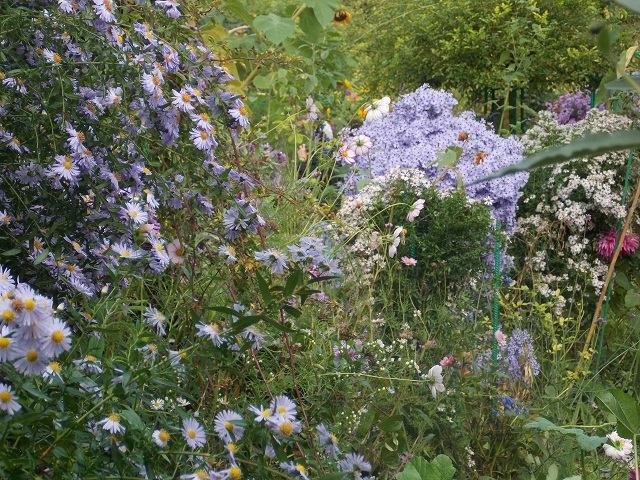 Floral Paradise Monet's Garden