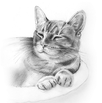 Sketch of Orange Ernie the cat by Jane West