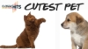 Top 10 Voting: Classic Hits Cutest Pet