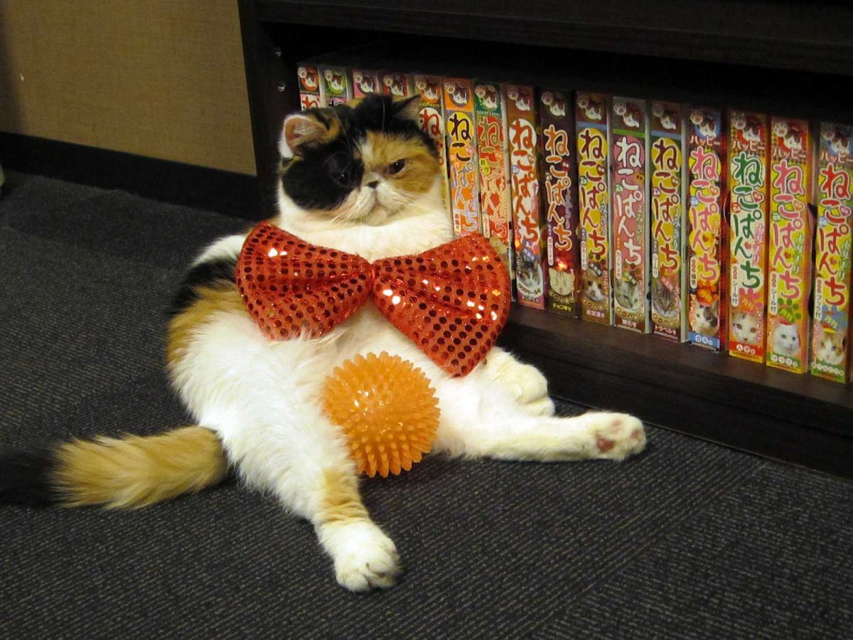 Here, they can put cats in costumes and read manga (comic books).