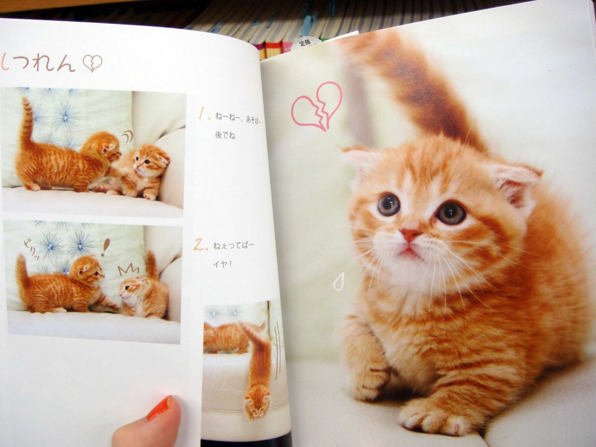 Only in Japan: books filled with kitten photos, sold in Kinokuniya Bookstores.