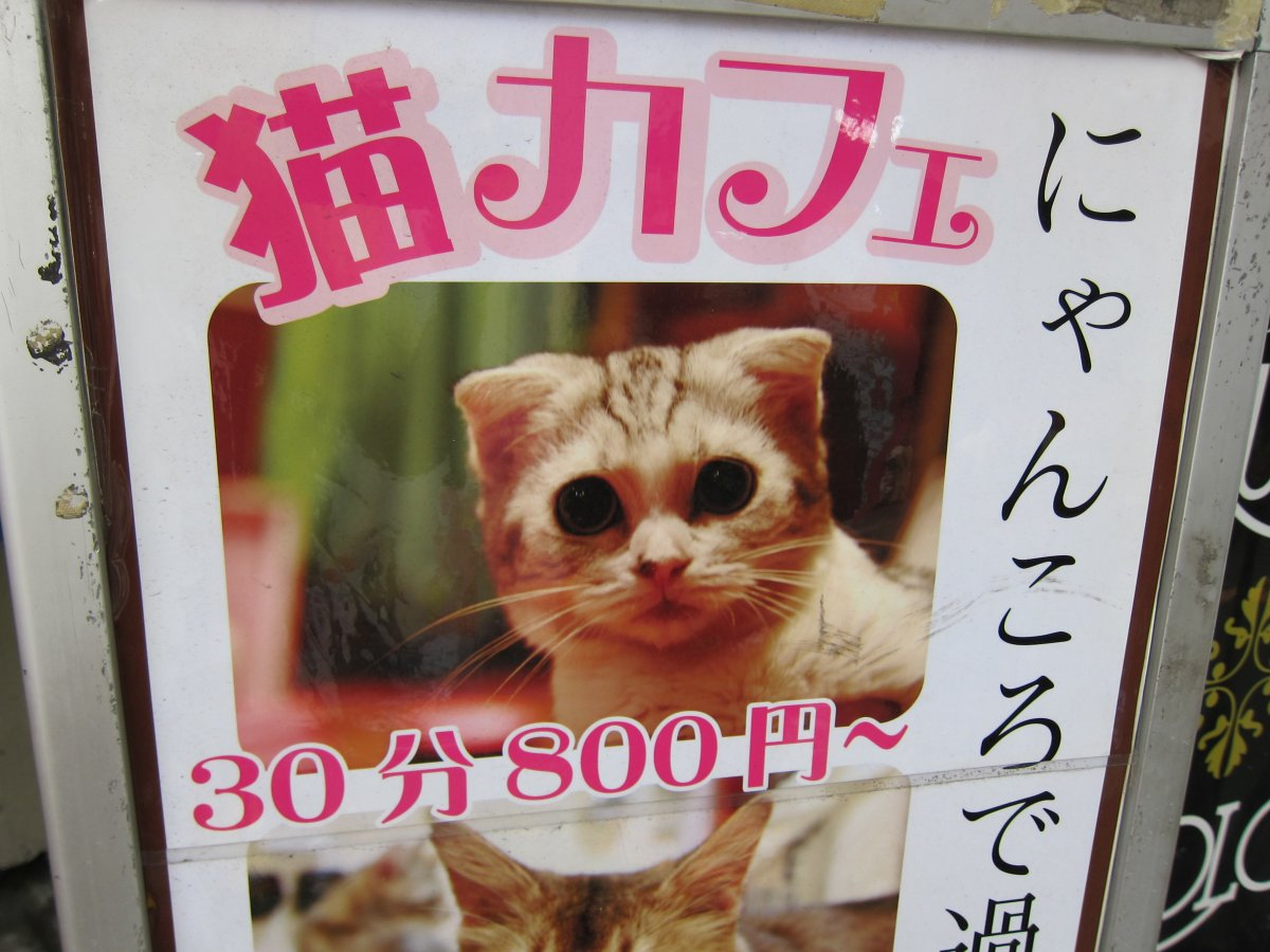 Many Japanese cannot keep pets in their small apartments, so they visit cat cafes.