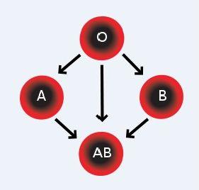 compatibilitatea-grupelor-de-sange