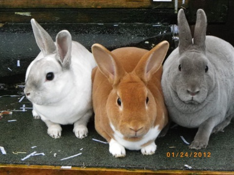 Abandoned Rabbits