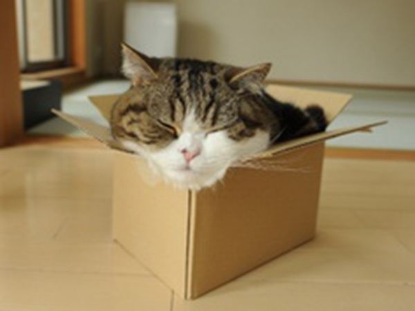 if i fits i sits cat in a box 441 If I Fits I Sits: 500 Cats in a Box MEGA Compilation Page 5