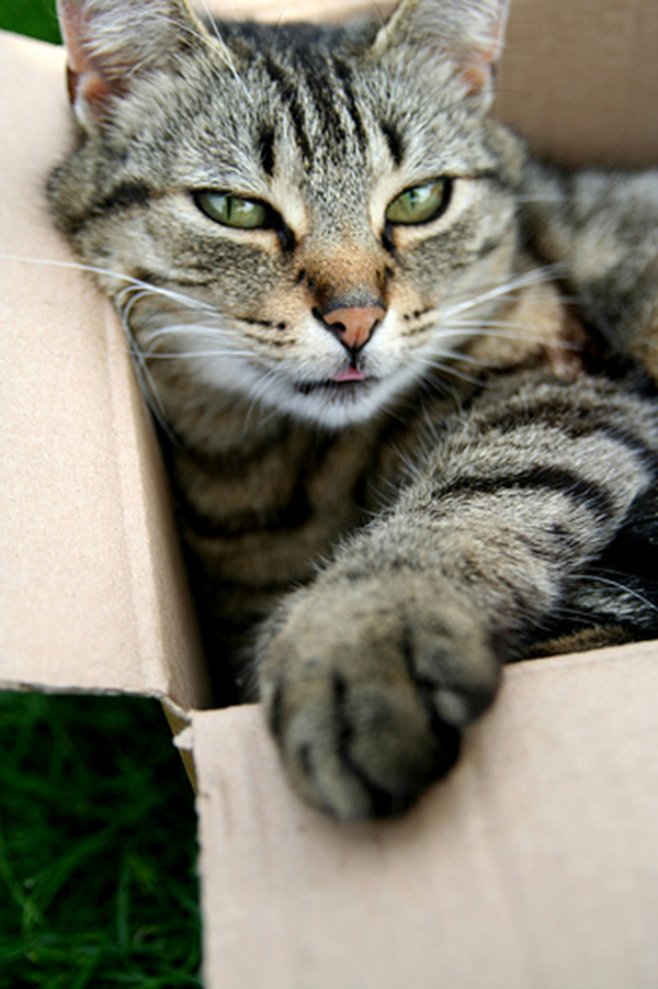 if i fits i sits cat in a box 409 If I Fits I Sits: 500 Cats in a Box MEGA Compilation Page 5