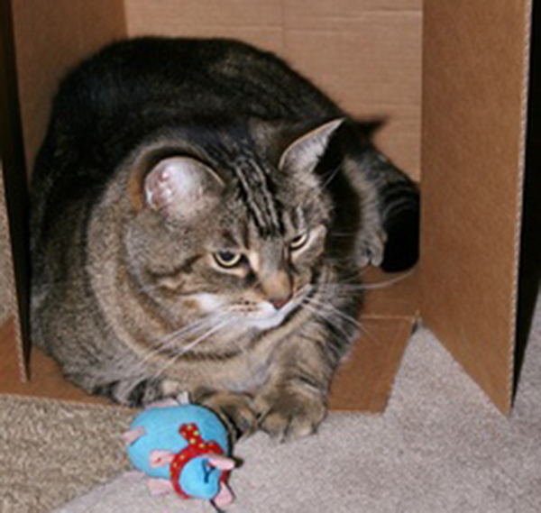 if i fits i sits cat in a box 448 If I Fits I Sits: 500 Cats in a Box MEGA Compilation Page 5