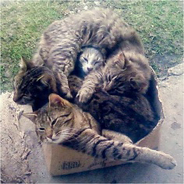 if i fits i sits cat in a box 450 If I Fits I Sits: 500 Cats in a Box MEGA Compilation Page 5