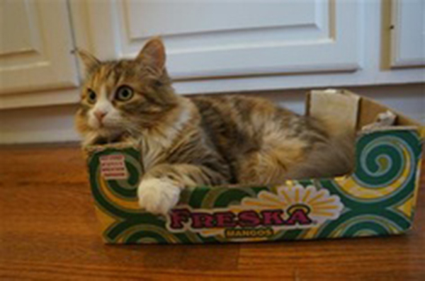 if i fits i sits cat in a box 435 If I Fits I Sits: 500 Cats in a Box MEGA Compilation Page 5