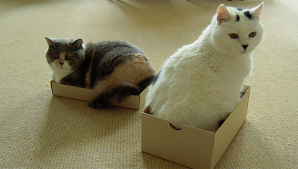if i fits i sits cat in a box 416 If I Fits I Sits: 500 Cats in a Box MEGA Compilation Page 5