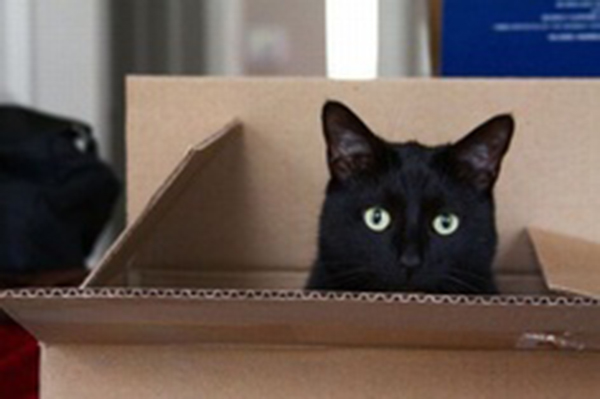 if i fits i sits cat in a box 459 If I Fits I Sits: 500 Cats in a Box MEGA Compilation Page 5