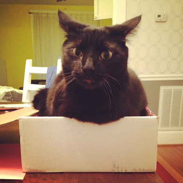if i fits i sits cat in a box 408 If I Fits I Sits: 500 Cats in a Box MEGA Compilation Page 5