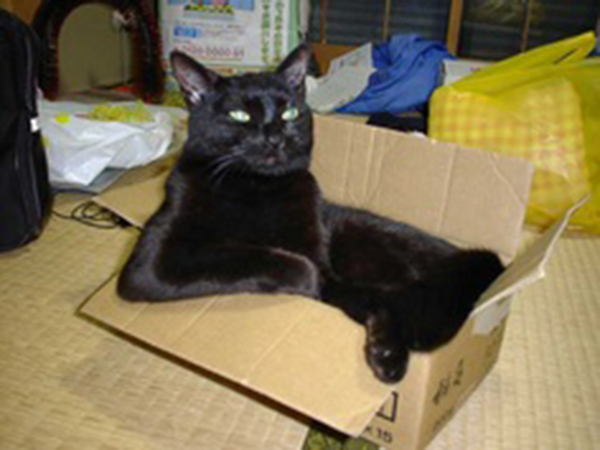 if i fits i sits cat in a box 425 If I Fits I Sits: 500 Cats in a Box MEGA Compilation Page 5