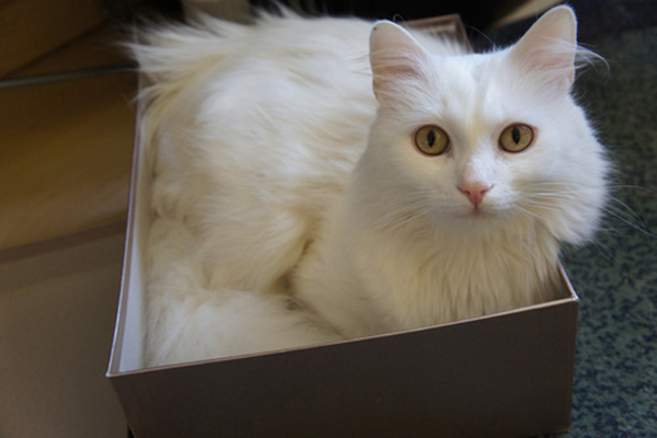 if i fits i sits cat in a box 406 If I Fits I Sits: 500 Cats in a Box MEGA Compilation Page 5